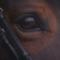 Mountford Equestrian Filming